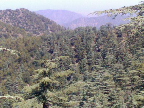 6. Macheras National Forest Park