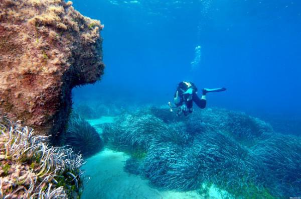 The Zenobia Wreck Diving Site
