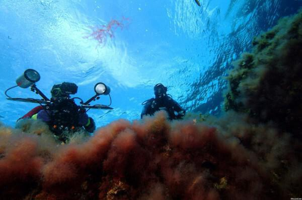 Helicopter Wreck Diving Site