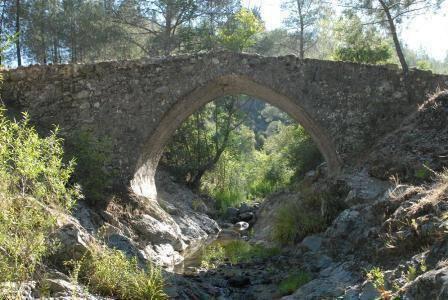 Venetian Bridge Olive