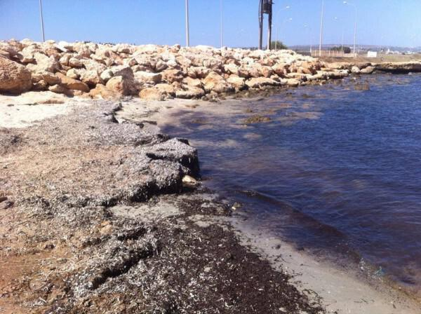 """Table Positions Areas For Dog Beaches Famagusta – Area """"Louma"""""""