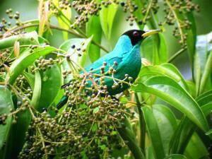 Ecotourism in Panama