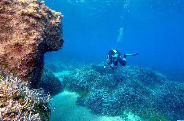 Νήσος Γουάιτ αγώνα dating Οι ντουγκορς χρονολογούνται με σκοπό