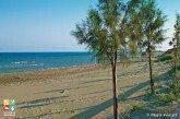 Παραλία Κίτι Παρασόλια Καρέτα